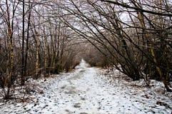 Tempo do inverno, tempestade de gelo Fotos de Stock Royalty Free