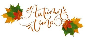 Tempo do outono do texto da rotulação da caligrafia as folhas de outono amarelas, vermelhas e verdes cinzelaram em um fundo branc Fotografia de Stock Royalty Free