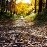 Tempo do parque do outono in fine fotografia de stock