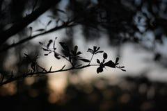 Tempo do por do sol Foto de Stock