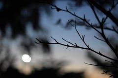 Tempo do por do sol Fotos de Stock
