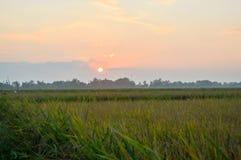 Tempo do por do sol em campos do arroz Imagem de Stock Royalty Free