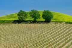 Tempo do vinhedo de Toscânia na primavera com árvores verdes e o céu azul foto de stock