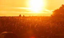 Tempo ed erba di tramonto fotografia stock