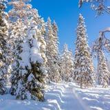 Tempo ensolarado do inverno bonito na floresta fotografia de stock