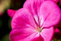 Tempo grazioso del fiore Immagini Stock Libere da Diritti