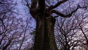 Tempo-lapso de florestas do inverno em Inglaterra video estoque