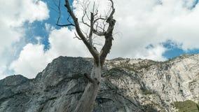 Tempo-lapso inoperante da montanha da árvore filme