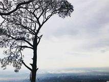 Tempo nevoento com vista bonita da árvore imagens de stock