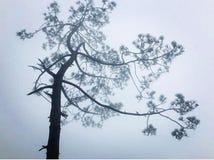 Tempo nevoento e vista bonita da árvore foto de stock royalty free