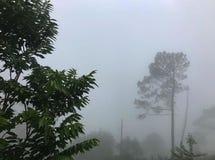Tempo nevoento e vista bonita da árvore imagens de stock royalty free
