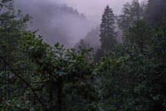 Tempo nevoento nas montanhas imagem de stock