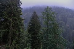 Tempo nevoento nas montanhas imagem de stock royalty free