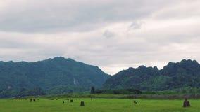 Tempo nuvoloso alla foresta pluviale tropicale video d archivio