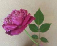 Tempo per un vaso! :) fotografia stock