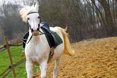 Tempo per una manifestazione: Cavalli Immagine Stock