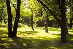 Tempo soleggiato nel parco Fotografia Stock Libera da Diritti