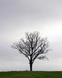 Tempo sozinho Foto de Stock