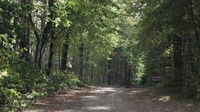 Tempo ventoso nel mucchio della foresta di legna da ardere tagliata vicino alla strada stock footage