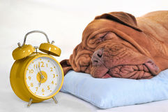 Tempo a Wake-Up? Fotos de Stock Royalty Free