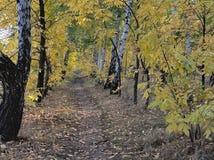 Temporada de otoño Fotografía de archivo