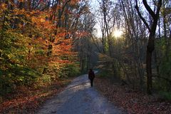 Temporada de otoño Fotografía de archivo libre de regalías