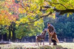 Temporada de otoño con color hermoso del arce en Nara Park, Japón Foto de archivo