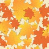 Temporada de otoño del ornamento de las hojas de arce de Autumn Seamless Pattern Background Yellow Fotos de archivo libres de regalías