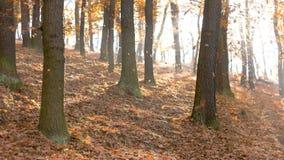 Temporada de otoño en el bosque Foto de archivo libre de regalías