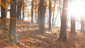 Temporada de otoño en el bosque Fotografía de archivo libre de regalías