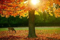 Temporada de otoño en el parque Imagen de archivo libre de regalías
