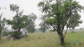 Temporal de lluvia duro y fuerte con saludo en verano almacen de metraje de vídeo