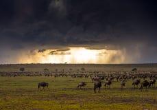 Temporal de mara do Masai foto de stock royalty free