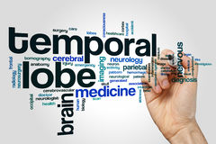 Temporal lobe word cloud. Concept on grey background stock photos
