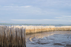 Temporary Dam by using Bamboo Wood royalty free stock photography