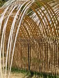 Temporary Outdoor Cane Sculpture, Flowing Curves. A temporary thin cane outdoor sculpture, with flowing cane curves. Floriade Spring flower and entertainment Stock Photo