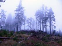 Temps brumeux dans la forêt Photographie stock libre de droits