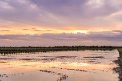 Temps crépusculaire sur préparer la terre pour planter au gisement de riz Photographie stock libre de droits