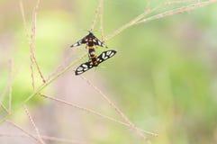 Temps d'amour d'insecte Photo stock