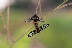 Temps d'amour d'insecte Images stock