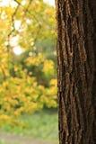 temps d'automne Photo libre de droits