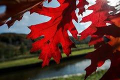 Temps d'automne, feuilles de rouge Image stock