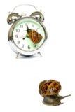 Temps d'escargot Photos libres de droits