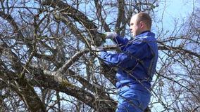 Temps de branche de pommier de pruneau de coupe d'homme au printemps dans le verger 4K banque de vidéos