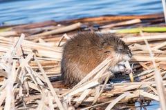 Temps de casse-croûte au lac photos libres de droits