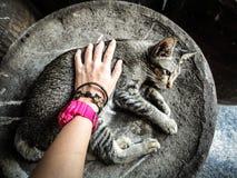 Temps de chat Images libres de droits