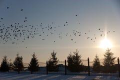 Temps de coucher du soleil avec des oiseaux Image stock