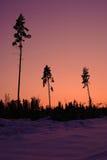 Temps de coucher du soleil dans la forêt de l'hiver Images libres de droits