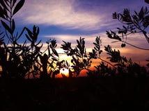 Temps de coucher du soleil en Jordanie Photographie stock libre de droits