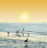 Temps de coucher du soleil sur une plage avec des oiseaux Photo libre de droits